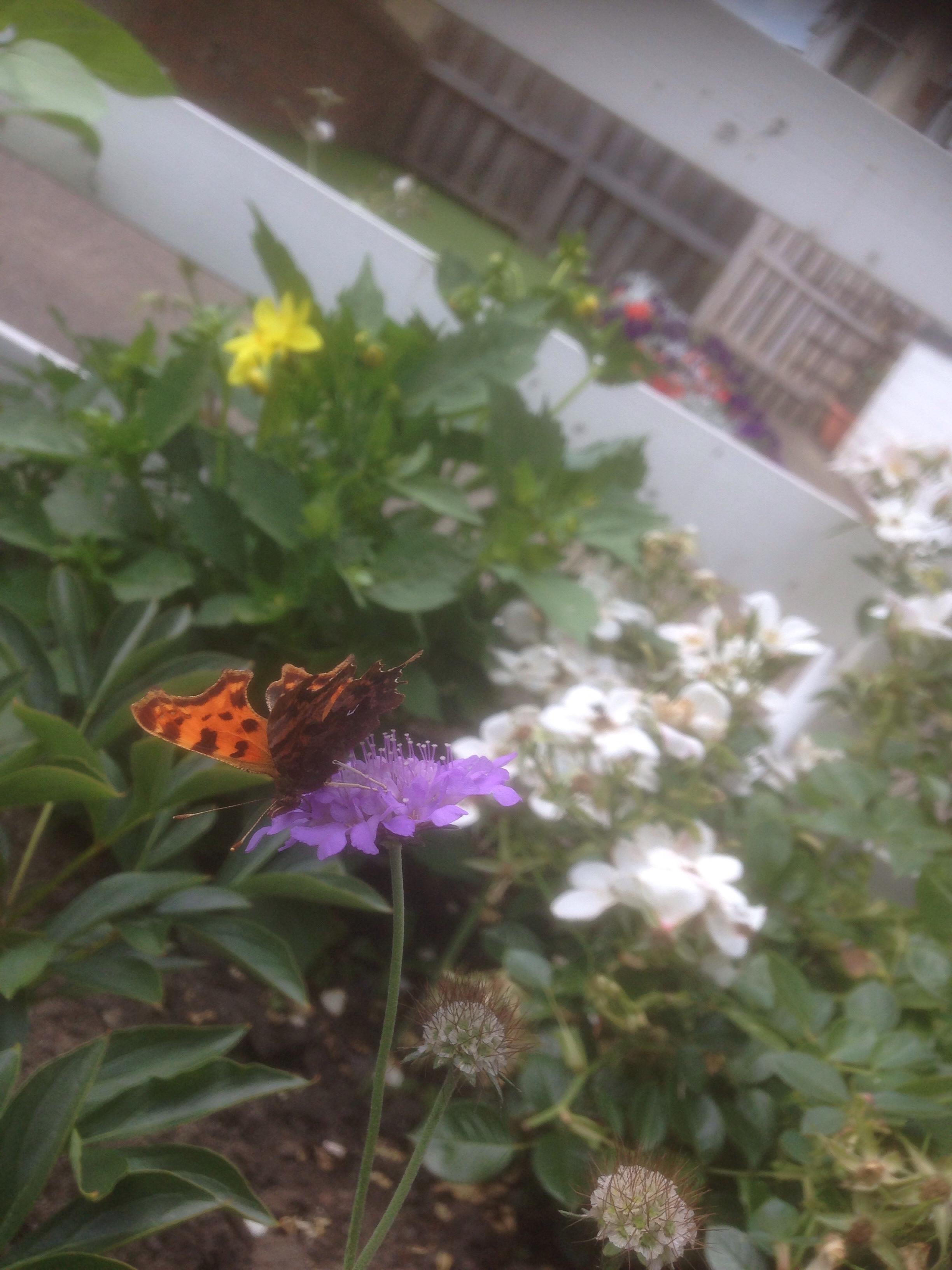 Poem: Waiting For Gardenias